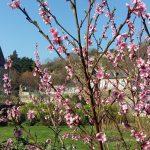Chambre d'hôte et gîte en location pour les vacances de printemps près de Saint-Malo en Bretagne
