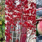 automne-bord-mer-bretagne-idee-sejour-vacance-toussaint